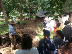Teaching Forest garden design and implementation.